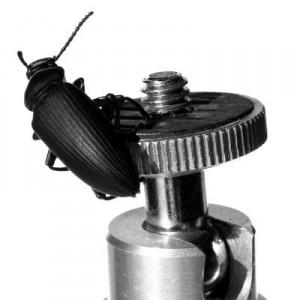 Kamera Stativ Kugel Kopf