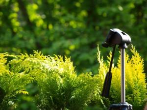 Kamera Stativ in der grünen Natur