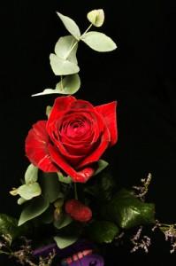 Rosen fotografieren im Studio