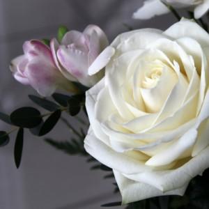 Weiße Rosen im Studio