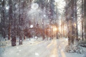 Fotografieren im Schnee Waldfoto