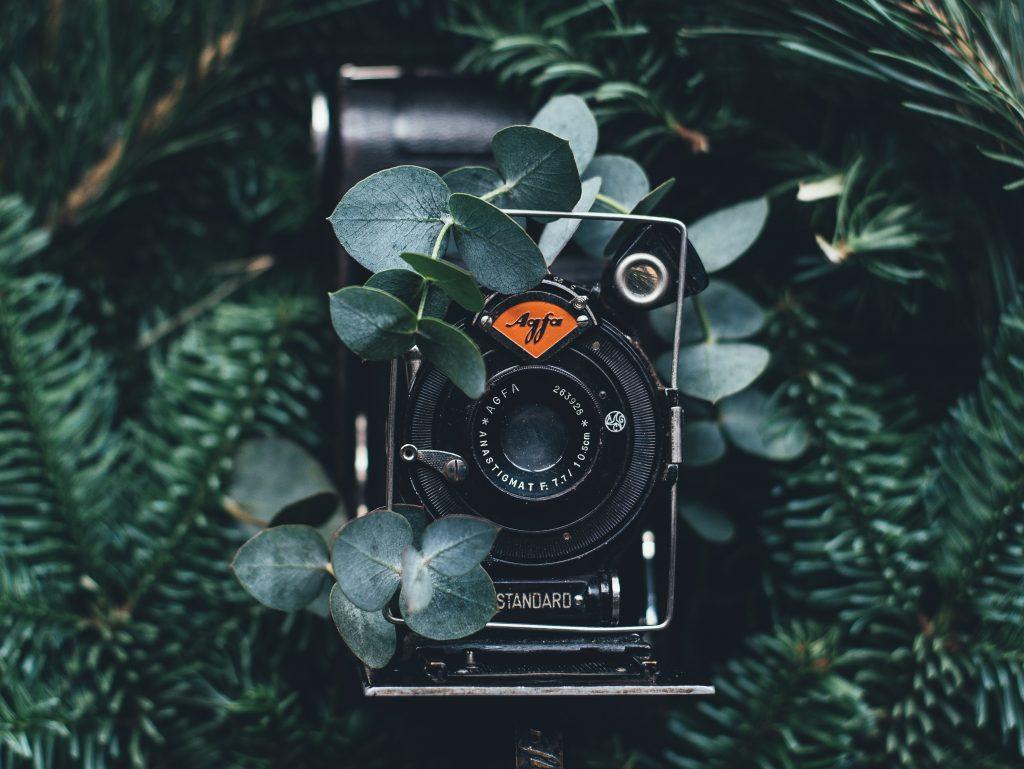 Kamera im Grünen | Fotografie Studium